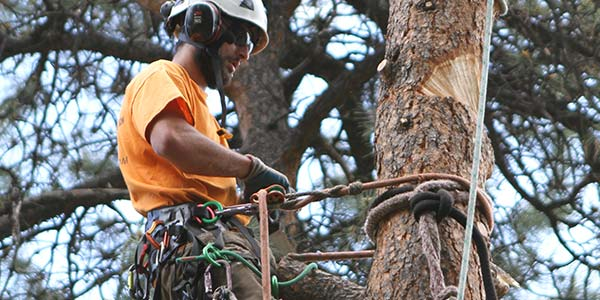 Conifer tree trimming, tree removal, fire mitigation and crane services