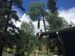 Crane Services High Tree Trimming In Evergreen Co