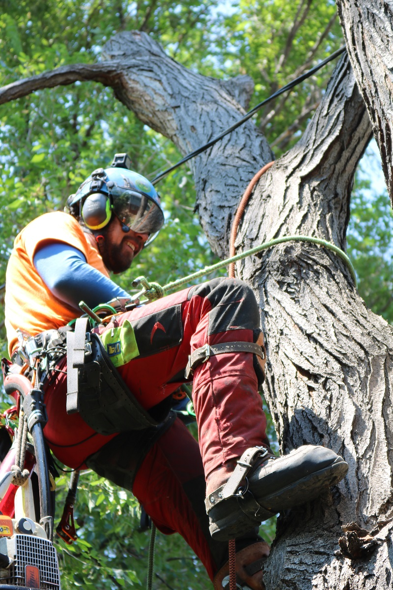 tree removal services in Denver