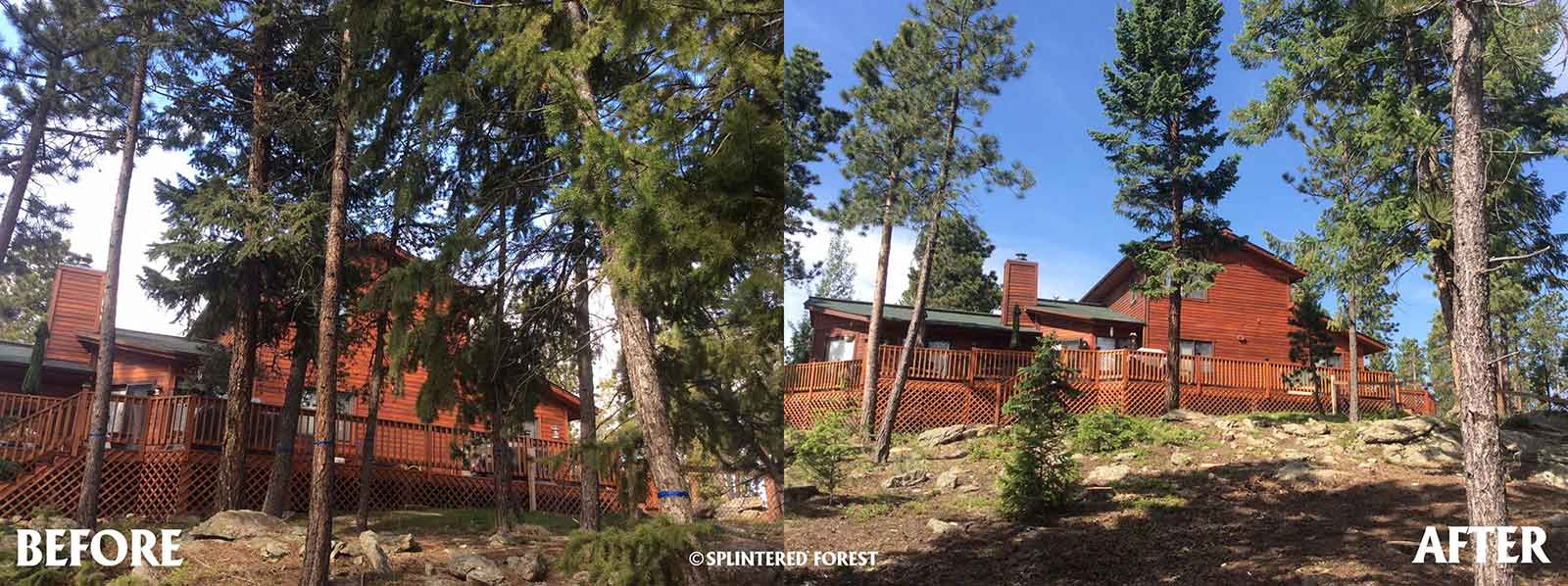Before & After Gallery | Fire Mitigation and Tree Removal in